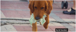 A dog carries dollar bills in its mouth.